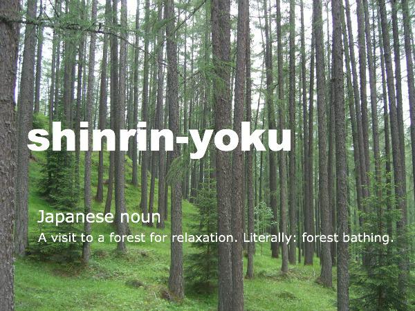 Image result for shinrin yoku
