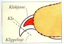 a80a6caa Klipp små korte stykker av neglen, trur du at nerven/blodåren snart kommer,  men trur du må klippe mere, klipp kjempe sakte med kloklipperen.