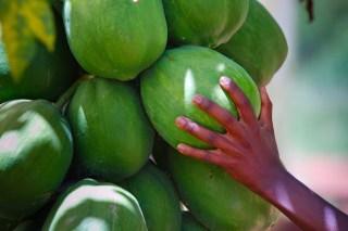 close up papayas