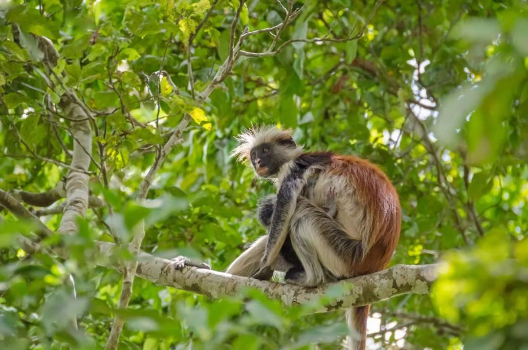 Jozani Forest - Nyumbani Residence | Zanzibar