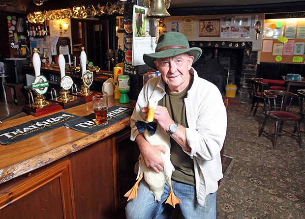 Star the duck and his owner Barry Hayman with a pint of ale at The Old Courthouse Inn in Chulmleigh, North Devon. Star has developed a taste for Ale and he is often seen drinking at the pub. Photo / SWNS