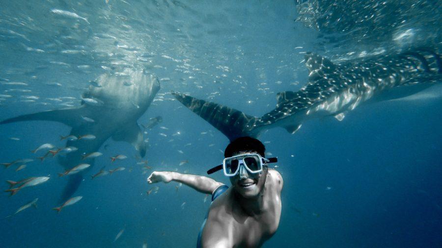 『sharkbanz』でサメ対策