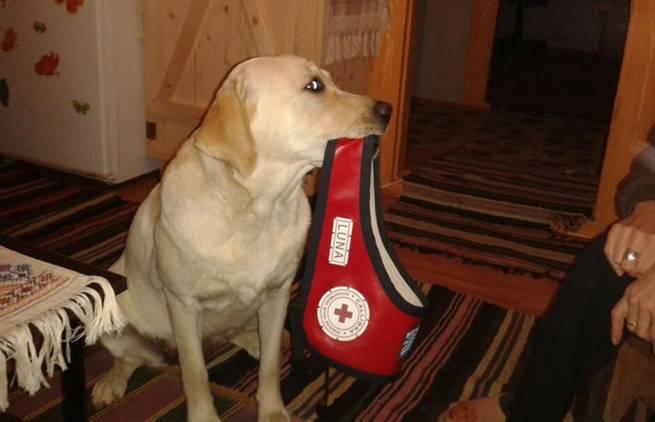 Λούνα, ο σκύλος της Αγάπης