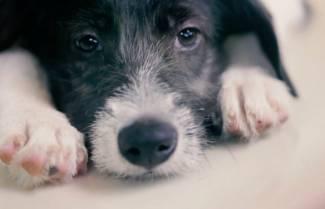 Ένα pet shop αντικατέστησε, μυστικά, τα ζώα προς πώληση με αδέσποτα (video)