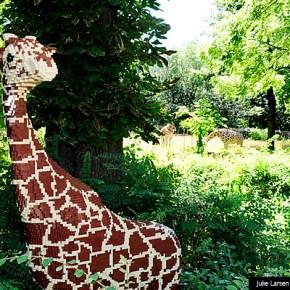 El Zoo del Bronx, una visita obligada si viajas a Nueva York