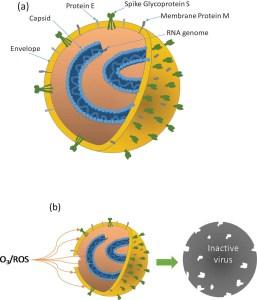 ozono inattiva coronavirus
