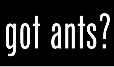 Do You Have Little Fire Ant?