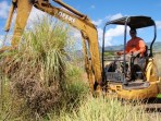 Pampas grass removal.