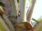 Bore holes at the base of palm frond.
