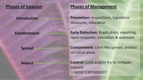 Management strategies are structured so that they mirror the phases of invasion. Prevention and early detection are the most effective and efficient means of management.