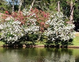 Spring Time Blooms Along Pond's Edge