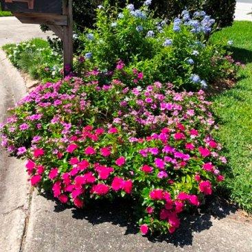 Flowers Along a Driveway