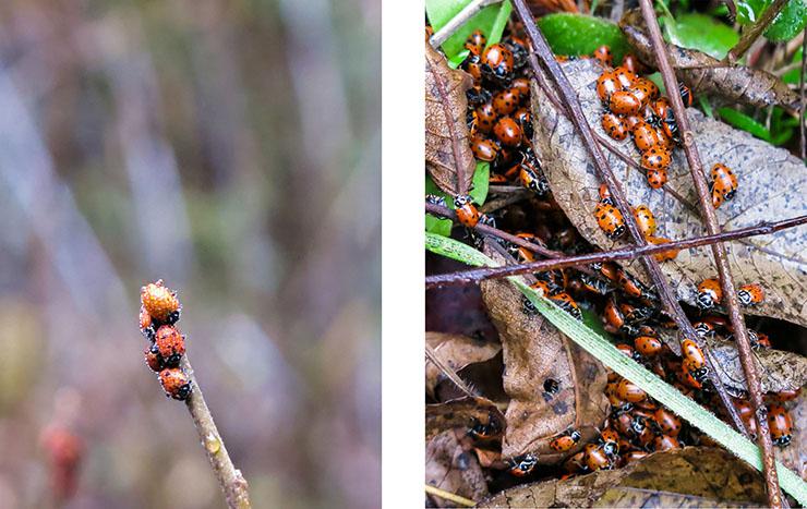 Lady Bug 6