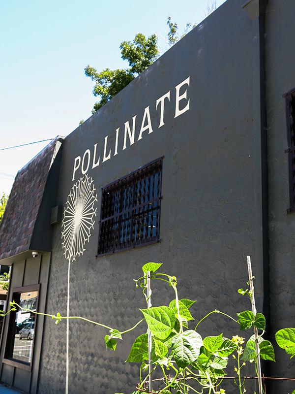 Pollinate 17