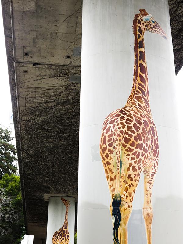 giraffe-16