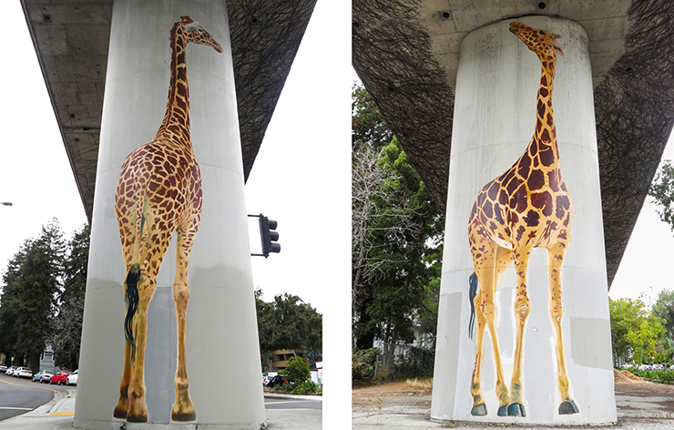 giraffe-17