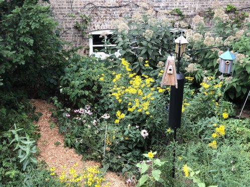 On the virtual garden walk this year is Candace Blank's garden, which showcases native plants. Blank has taken special effort to attract birds to her garden.