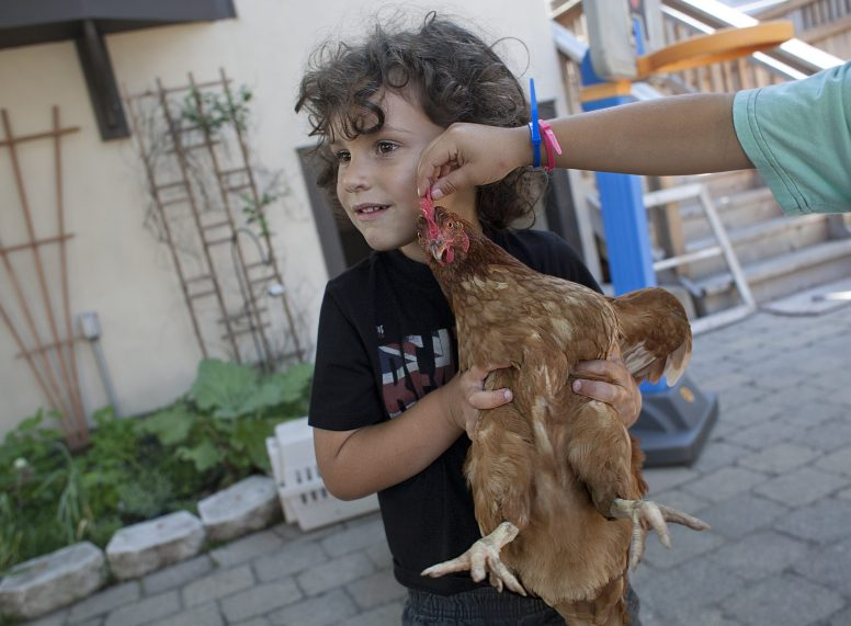 Adam Tocci, 4, holds Sally, one of three chickens in his backyard. His brother, Jonah, 6, strokes Sally's comb. You can meet Sally, the brothers and their mother, Angie Cataldo, on the July 26 Edible Garden Tour. (DAVID PIERINI/Staff Photographer)