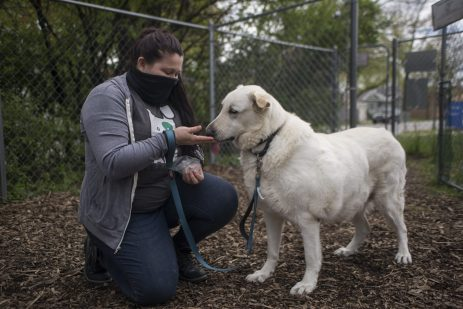 "Animal Care League has seen the number of animal adoption applications dramatically rise since the start of the pandemic, meaning animals like ""Pickles"" (above) are finding new homes (Alex Rogals/Staff Photographer)."