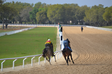 Oak-Ridge-Training-Center-racehorses training