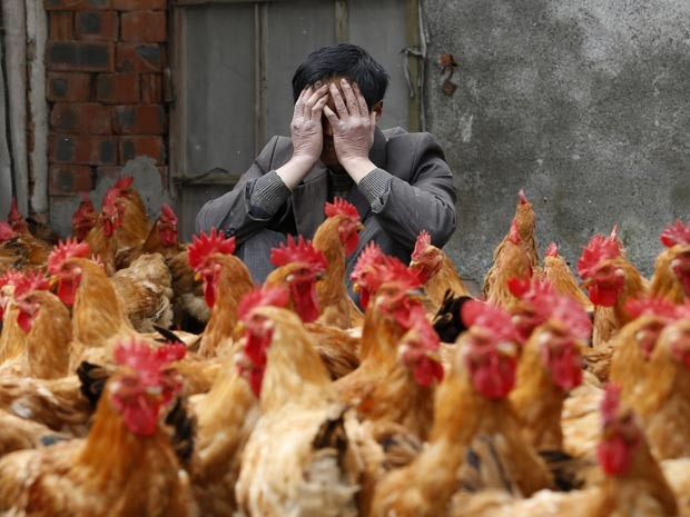 Transmissão do vírus H7N9 teria origem nas aves, aponta estudo (Foto: Reuters/William Hong)