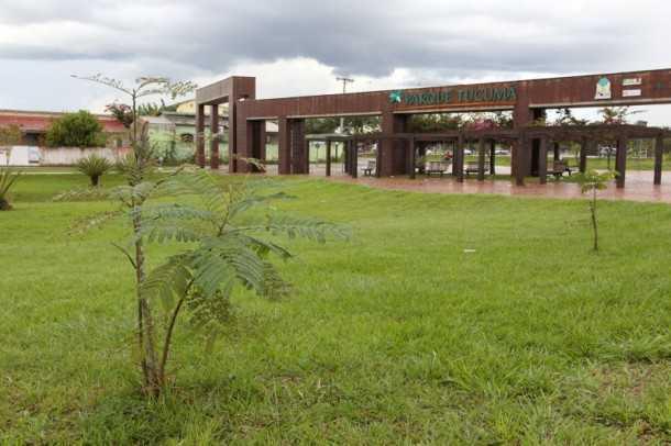 O Programa de Arborização Urbana que já começa a dar resultados (Foto: Angela Peres/Secom)