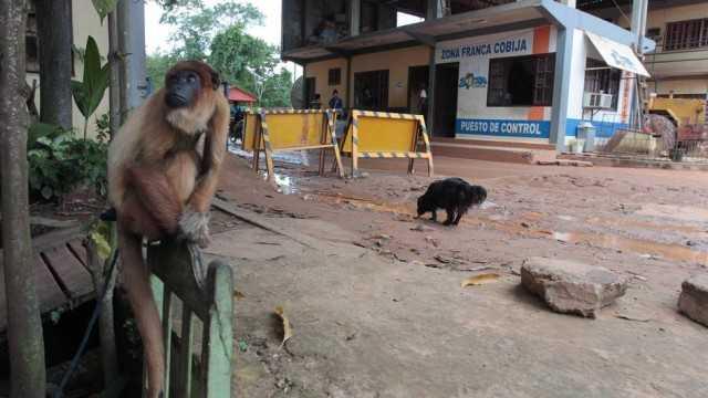 Macaco no posto da fronteira com o Brasil em Cobija, na Bolívia/Foto: Cléber Júnior / Extra