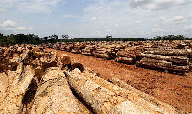 Pátio de estocagem da Agrocortex; produção anual será de 150.000 m³ de toras de 42 espécies. (Foto: Sergio Vale/Secom)