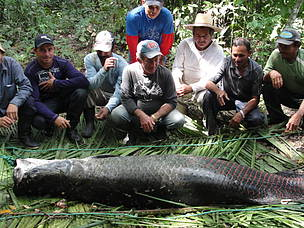 Pescadores do Acre buscam certificação internacional do pirarucu  Divulgação/WWF Brasil