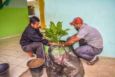 Meio Ambiente plantio-14