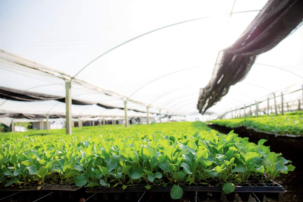歐盟促進有機農業 種子技術