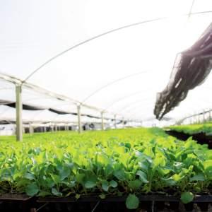 歐盟促進有機農業的2021行動方案