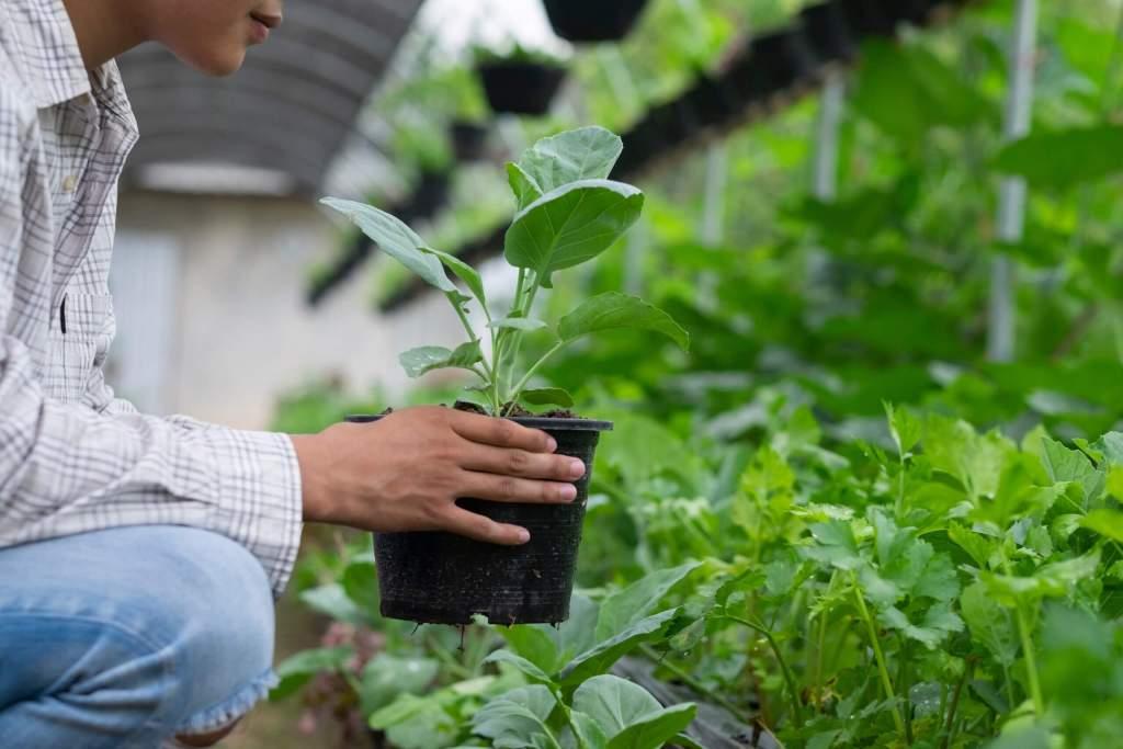 organic farmer holding plant KMZQKXY 1 scaled