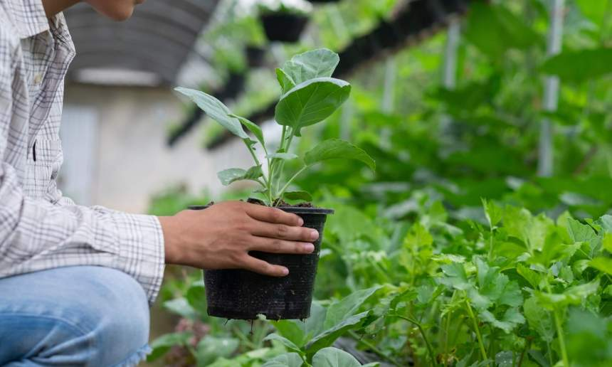 有機農業促進區的規劃課題分析