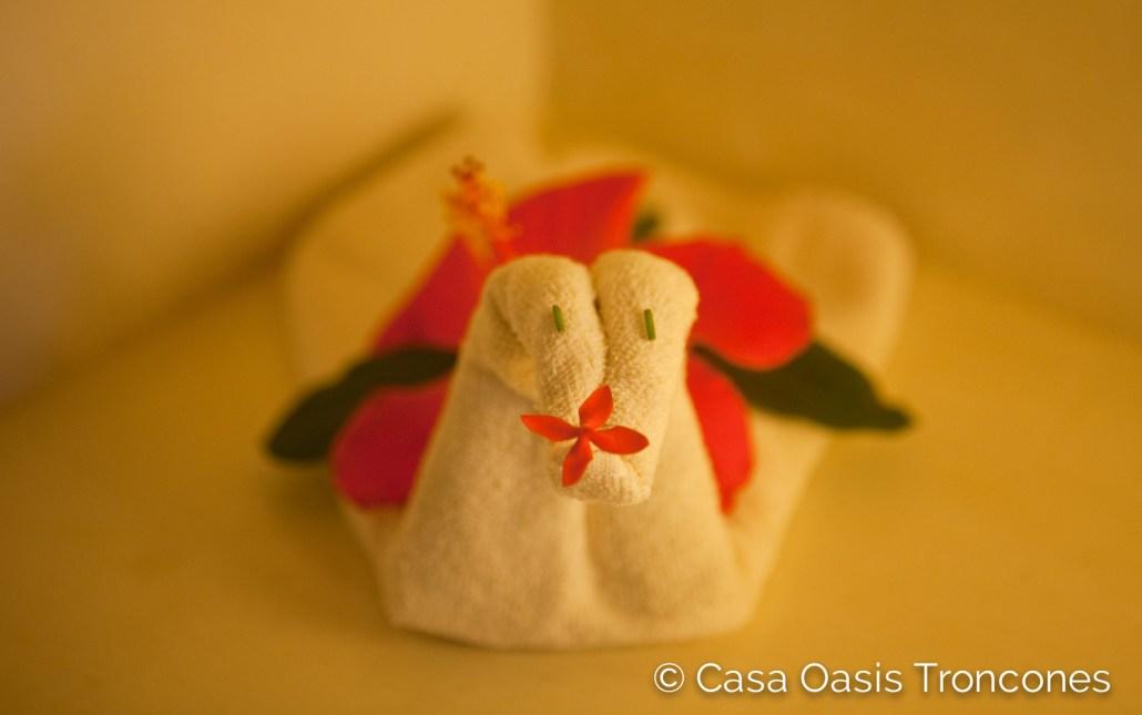 Towel art at Casa Oasis Troncones