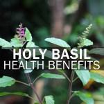 Health Benefits of Holy Basil