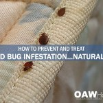 How to Prevent and Treat Bed Bug Infestation Naturally