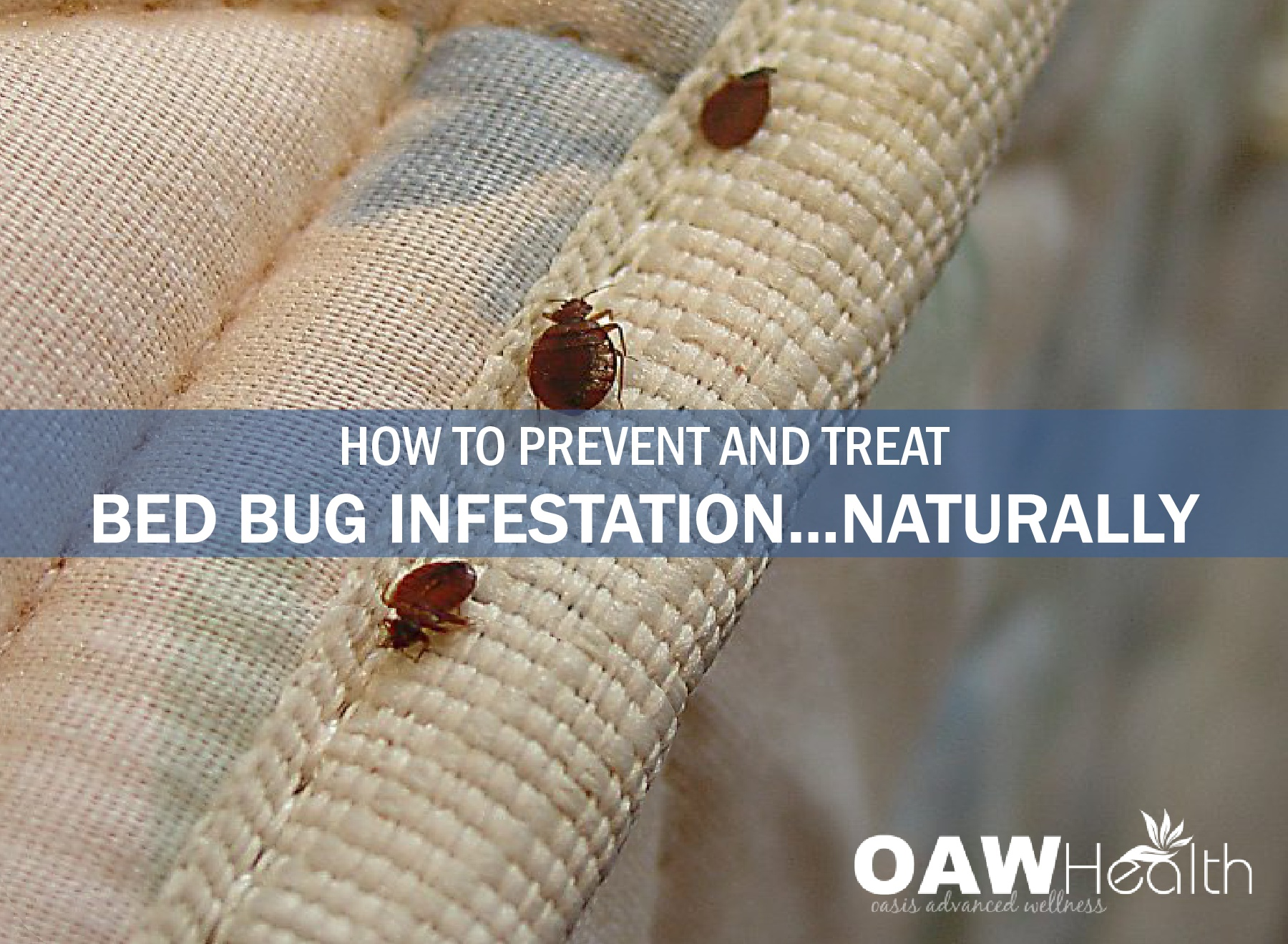How to Prevent and Treat Bed Bug Infestation…Naturally