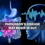 parkinson's disease may begin in the gut