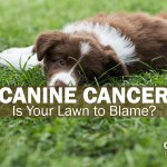 Canine Cancer - Is Your Lawn to Blame