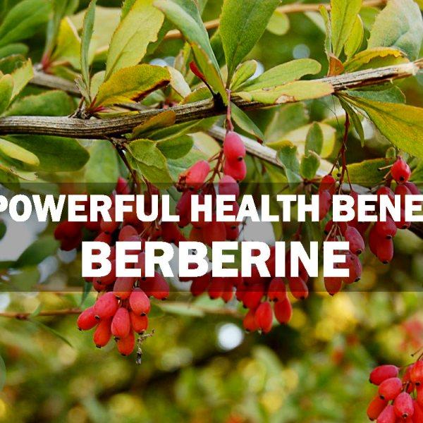 10 Powerful Benefits of Berberine