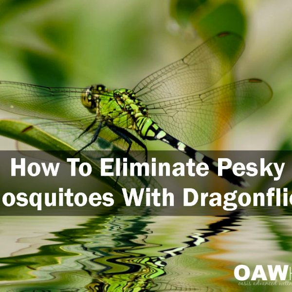 How to Eliminate Pesky Mosquitoes With Dragonflies
