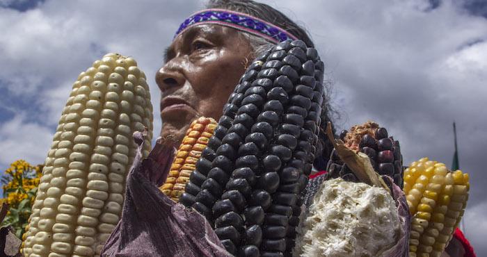 Resultado de imagen para la lucha por el maíz nativo