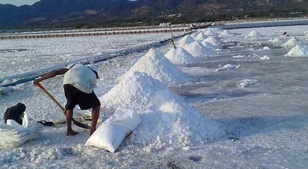 Inicia la cosecha de sal en las Salinas del Marqués