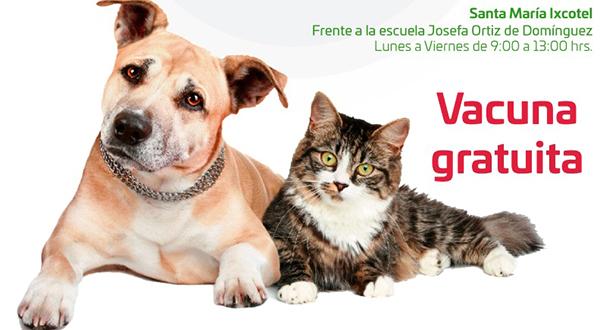 Iniciará Gobierno de Santa Lucía jornada de vacunación para perros y gatos 2018