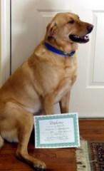 Southfield Dog Training