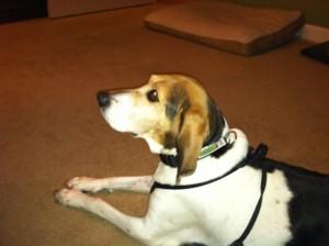 Kylie's Dog Training - Royal Oak Michigan