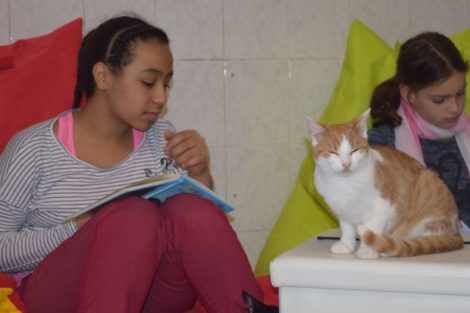 Einzigartig in Hessen: das Katzenlesezimmer des Alsfelder Tierheims. Nicht nur für die Kinder ein spannendes Projekt, sondern auch für die Katzen. Foto: ls