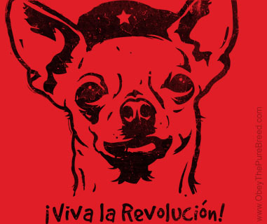 https://i2.wp.com/www.obeythepurebreed.com/images/chihuahua_che_large.jpg?w=747