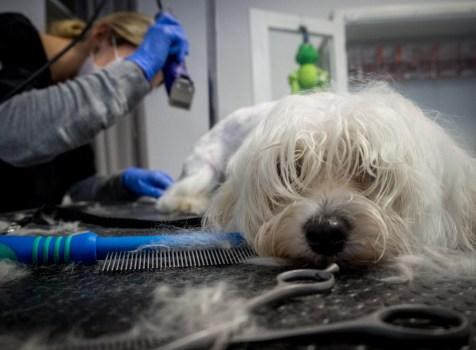 [recenzja] Nie o samą fryzurę u groomera chodzi.